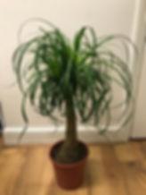 big plant 7.jpeg