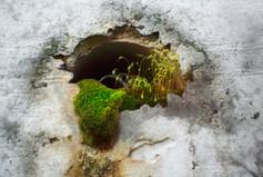 Chthonic Garden 2011