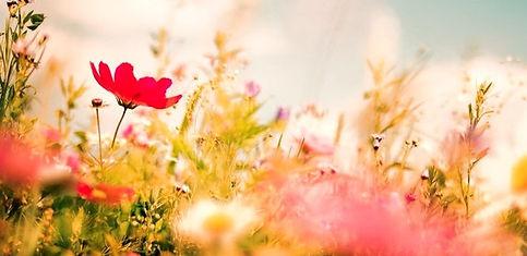 spring-meadow-royalty-free-image-1579125133_edited_edited_edited_edited.jpg