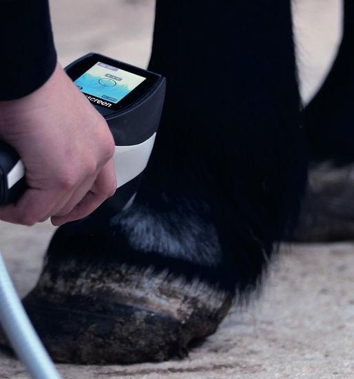 Aparato para aplicación de crioterapia en equinos. Efcto analgésico y antinflamatorio