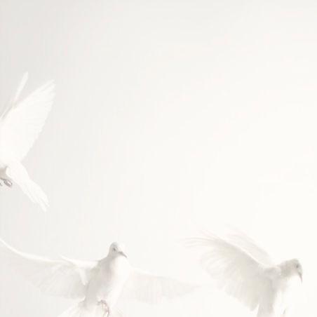 White birds.jpg