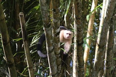 San Pedrillo, Costa Rica