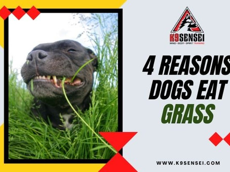 4 Reasons Dogs Eat Grass