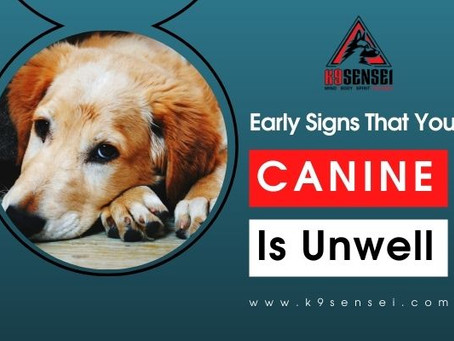 Early Signs That Your Canine Is Unwell
