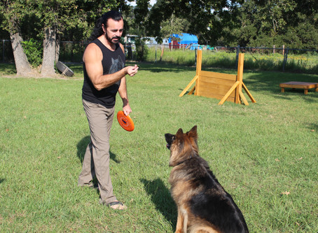 Learning A Few Dog Training Tips Will Help