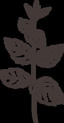 MS_plant-cedar.png