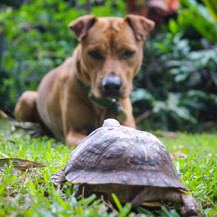 Peahi and Tortoise, Oahu, HI