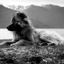 Chilean Trash Pup