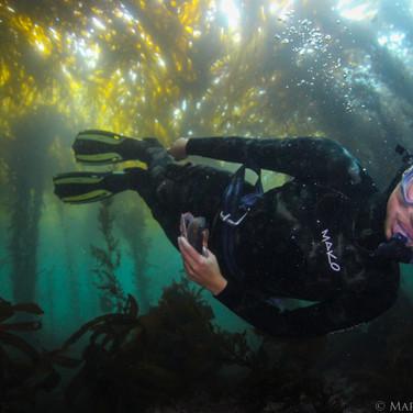 Sutara Nitenson Collecting empty abalone shells in Big Sur, CA