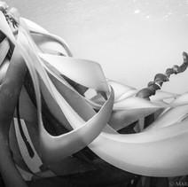 Bull Kelp, Big Sur, CA