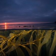 Sunset from the kelpbeds, Santa Barbara, CA