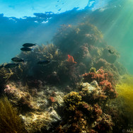 A colorful reef in the shallows off Catalina Island, CA.