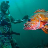 David Laird with a Vermillion Rockfish in Big Sur, CA