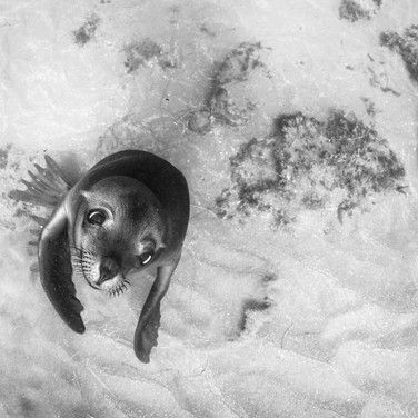 Happy little California Sea Lion, Channel Islands, CA.
