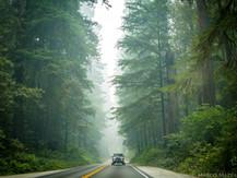 Northern Califronia Redwoods