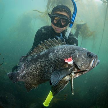 Sutara Nitenson with a solid Black Rockfish harvested in Big Sur, CA.