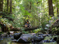 Kyle in the Redwoods, Northern California