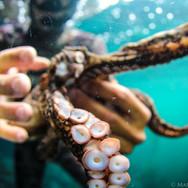 Myself holding a Two Spot Octopus off Anacapa Island, CA. Photo by Sutara Nitenson, edited by myself.
