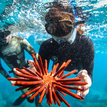 Sutara Nitenson shows off a nice Pencil Sea Urchin, Talus Carpenter looks on.