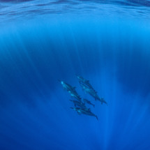 Spinner Dolphins, Kona HI