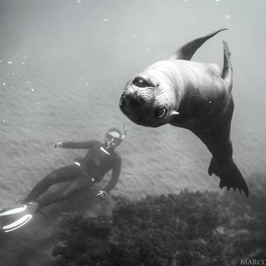 Nick and California Sea Lion, Channel Islands, CA.