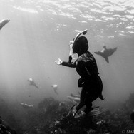 Sutara Nitenson making friends with the California Sea Lions off the Channel Islands, CA.