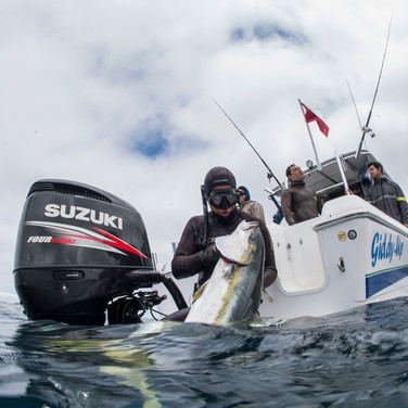 Mathieu Couillard dragging a large yellowtail on board