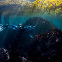 Rebekah swimming through the shallows in Carmel