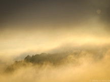 Fog in Trinidad, CA