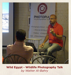 Wild Egypt - Wildlife Photography Talk b