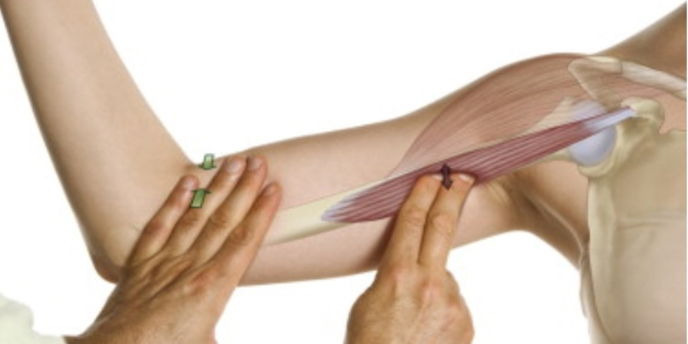 Enhancing Your Touch Literacy - Location, Palpation, Sensation