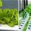 Thumbnail: 수직형 수경재배기