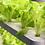 Thumbnail: 실내 캐비닛 수경재배기