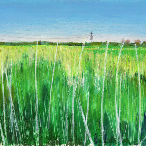 Grass in the marshes.jpg