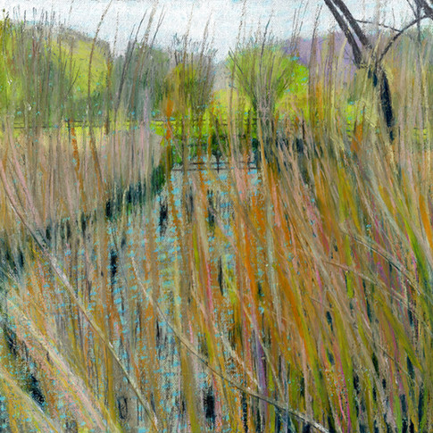 Pond in the marshes.jpg