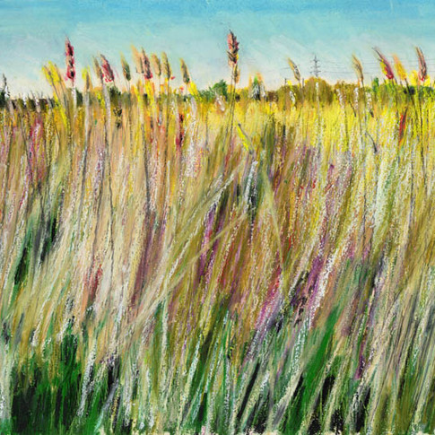 Reeds in the marshes.jpg