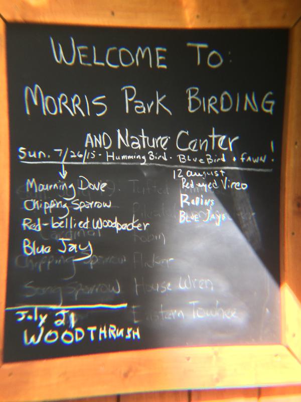 Morris Park Birding