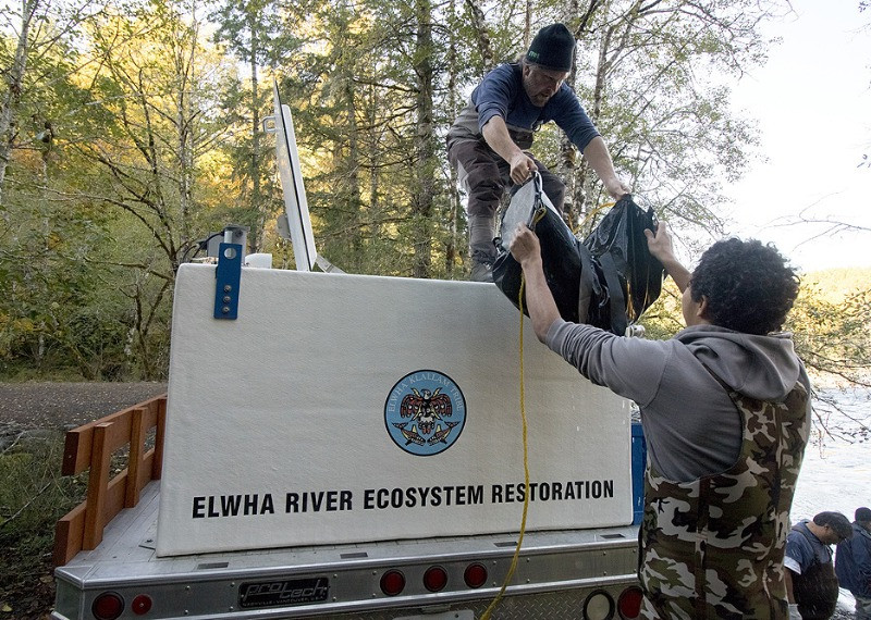 Elwha River ecosystem restoration