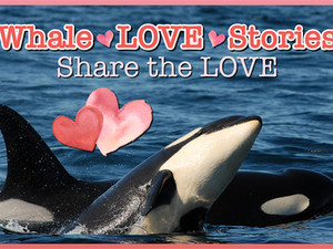 Whale Love Stories