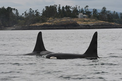 K21 and J38 play with kelp