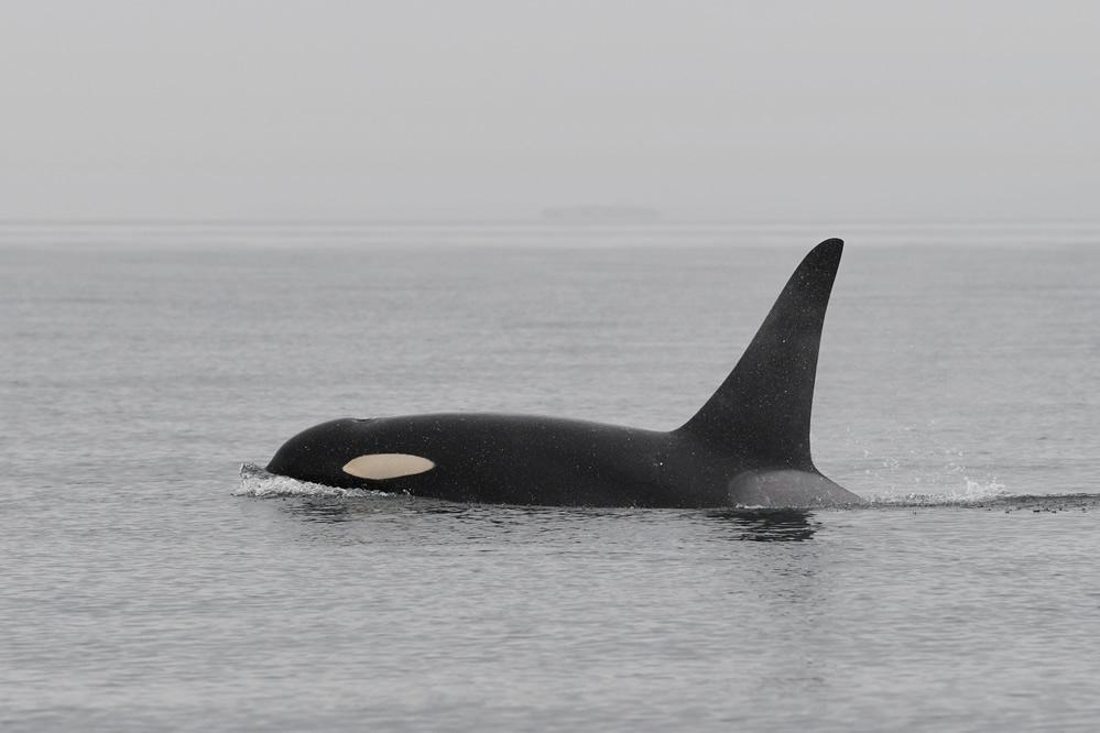 L41's offspring: K35