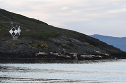 Steller Sea lions at Green Point