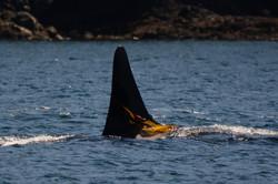 J38 with kelp