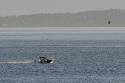 whale at 1.5 mile