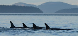 Logging whales