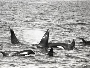 First J pod Encounter!  Encounter 2, April 16 1976