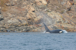 T19C passes seals at Barren Island
