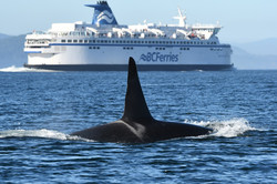 J26 and BC Ferry