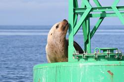 SSL on Hein Bank buoy