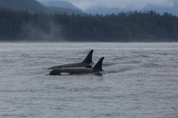 Ks off Vancouver Island